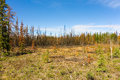 A landscape partially ravaged by fire in northern canada boreal forest scorched from recent burns as seen the northwest Stock Photography