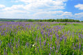 Landscape photo flowers field blue sky Royalty Free Stock Images