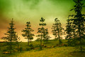 Landscape with pine trees Royalty Free Stock Photo