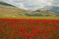 Landscape of the plain of castelluccio in italy with field poppies Royalty Free Stock Photography