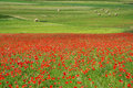 Landscape of the plain of castelluccio in italy field poppies Royalty Free Stock Photo