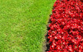 Landscape with red flower bed and grass bright beds blossoms against green for backgrounds Stock Image