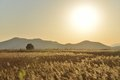 Landscape of reeds field in suncheon bay korea Stock Photos