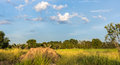 Landscape rice field with mound in middlefield and beautiful blue sky and clouds