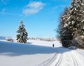 Landscape scenery with modified crosscountry skiin Royalty Free Stock Photo