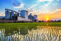 Landscape shot rice mill with reflection and sunset Royalty Free Stock Photo