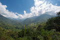 Landscape of the sierra nevada in colombia hills outside minca dotted with small coffee plants Royalty Free Stock Photos