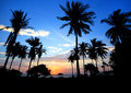 Landscape Silhouetted of coconut tree during sunset, Thailand Royalty Free Stock Photo