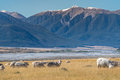 Landscape of South Island of New Zealand Royalty Free Stock Photo