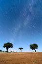 Landscape and stars trail with holm oaks in a starry night minutes startrail Royalty Free Stock Image