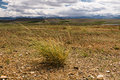 Landscape steppe plants the altai russia with a or semi desert mountains at the horizon and cloudy sky and a grass some as a Royalty Free Stock Images