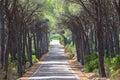 Landscape of straight road under the trees on Sardinia Island, I