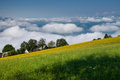 Landscape summer with green meadow over clouds Stock Photos