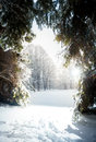Landscape of sunny day at winter fir forest Royalty Free Stock Photo