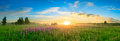 Landscape with the sunrise, a blossoming meadow panorama Royalty Free Stock Photo