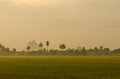 Landscape sunset green rice farm Royalty Free Stock Images