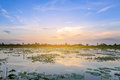 Landscape of sunset on lotus pond Royalty Free Stock Photo