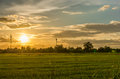 Landscape sunset on rice field with beautiful blue sky and clouds