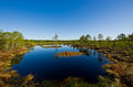 Landscape swamp in lahemaa national park Royalty Free Stock Photo