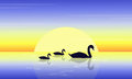 Landscape of swan on lake at sunset