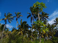 Landscape of tanzania scenery from different parts Stock Images