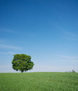 Landscape with a track a tree blue sky Stock Photos
