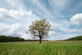 Landscape with tree blue sky clouds forest and green grass Stock Photo