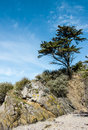 Landscape with a tree on a cliff pine Royalty Free Stock Images