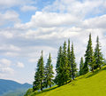 Landscape with trees on flank of hill Stock Photos