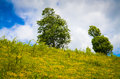 Landscape with trees on flank of hill mountain Stock Image