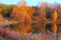 Landscape with trees reflecting in a lake autumn Royalty Free Stock Images