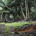 A small path in a tropical forest of sao tome and principe Royalty Free Stock Photo