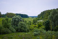 Landscape vegetation. Royalty Free Stock Photo
