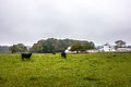 Landscape view of a cow farm ranch in fog Royalty Free Stock Photo