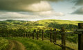 Landscape view of nice italian sunny summer countryside Royalty Free Stock Photography