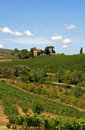 Landscape with vineyard in the Tuscany, Italy Stock Image