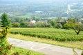 Landscape Of Vineyards