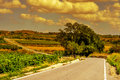 Landscape with vineyards and a secondary road in a mediterranean view of quite country at sunset Royalty Free Stock Image