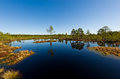 Landscape viru bog in lahemaa national park Stock Image