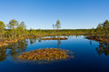 Landscape viru bog swamp in estonia Royalty Free Stock Image