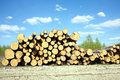 Landscape width stacked pine logs rustic with sawed in a pile over forest and beautiful sky clouds in summer day Royalty Free Stock Photo