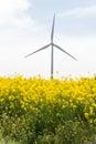 Landscape of wind turbine in rape field Royalty Free Stock Photo