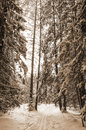 Landscape of winter forest in the old style sepia Royalty Free Stock Photo
