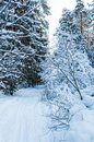 Landscape of winter forest snow covered tree Stock Photography