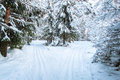 Landscape of winter forest snow covered tree Stock Images