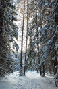 Landscape of winter forest snow covered tree Royalty Free Stock Photo