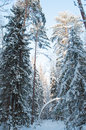 Landscape of winter forest snow covered tree Royalty Free Stock Image