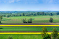 Landscape with yellow oilseed Royalty Free Stock Photo