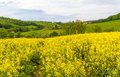 Landscape with yellow rapeseed field a in germany Royalty Free Stock Photo
