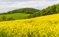 Landscape with yellow rapeseed field a in germany Stock Image